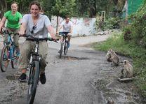 aapjes langs de weg tijdens fietstour in Rajasthan - Rajasthan - Udaipur - India - foto: Bhawani Singh Chandela