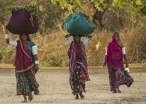 Rajasthan dames met oogst - Bera - India - foto: Castle Bera