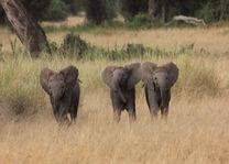 olifantjes - masai mara - Kenia