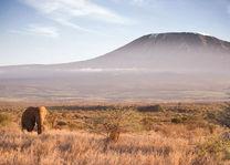 amboseli - satao elerai - Kenia - foto: Satao Elerai