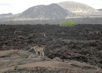 landschaop Tsavo West - Tsavo West - Kenia