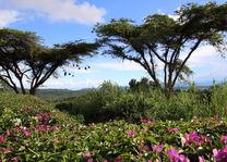 landschap - Ngorongoro Hooglanden - Karatu - Tanzania - foto: Martijn Visscher