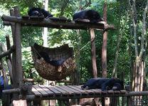 Laos - Luang Prabang - Free the Bears