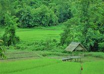 Laos - Luang Prabang - lunch in het rijstveld
