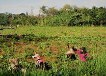 Laos - Luang Prabang - zwaaien naar rijstwerkers
