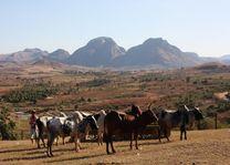 Ambalavao - vee1 - Ambalavao - Madagaskar - foto: Martijn Visscher