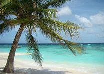 palmboom wit strand malediven - Malediven - foto: Floor Ebbers