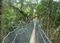Canopy Walk - Kota Kinabalu - Maleisië