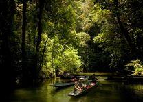 mulu national park - mulu national park - Maleisië