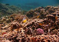 vissen en koraal op Mauritius - Mauritius - foto: Bamba Sourang
