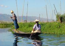 beenroeier - Inle Lake - Myanmar