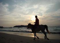 paard op strand - Ngapali - Myanmar - foto: Berry ter Horst