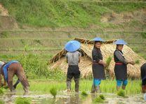 Pintauk - Kentung - Kengtung - Myanmar - foto: lokale agent
