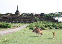 tempel Mrauk U - Mrauk U - Myanmar - foto: lokale agent