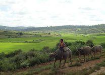 kindje op koe tussen Kalaw en Inle Lake - Kalaw - Myanmar - foto: lokale agent