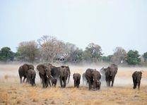olifanten bij Nambwa Tented Lodge - Nambwa Tented Lodge - Namibië - foto: Nambwa Tented Lodge