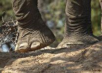 olifantenpoten Damaraland - Damaraland - Namibië - foto: lokaal agent