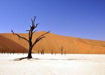 Deadvlei - Sossusvlei - Namibië - foto: rechtenvrij