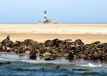 Zeehonden in Walvis Bay - Walvis Bay - Namibië - foto: rechtenvrij