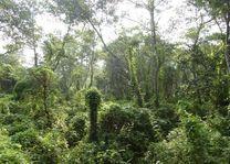 natuur Chitwan - Chitwan - Nepal - foto: Marloes Wijnhoff