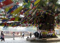 Lumbini - Lumbini - Nepal - foto: Archief