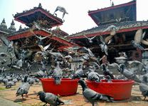 Duiven bij Durbar Square in Kathmandu - Kathmandu - Nepal - foto: Archief