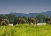 olifanten in het Chitwan National Park - Chitwan National Park - Nepal - foto: Barahi Jungle Lodge