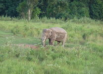 olifant in Khao Yai National Park - Thailand - foto: Floor Ebbers