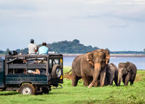 olifanten - Minneriya - Sri-Lanka - foto: shutterstock