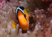onderwaterwereld - Malediven - foto: flickr