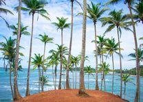 palmboom - zee - Mirissa - Sri Lanka - foto: unsplash