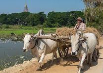 platteland - Magyikan Village - Myanmar - foto: lokale agent
