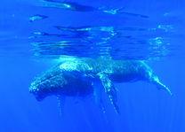 walvissen - Reunion - Réunion