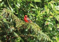 vogel - Reunion - Réunion