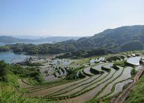 rijstvelden overdag - Oura No Tanada - Japan - foto: JNTO