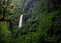 Waterval in het Nyungwe National Park - Nyungwe National Park - Rwanda