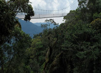 Loopbrug in het Nyungwe National Park - Nyungwe National Park - Rwanda