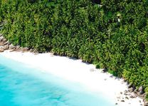 Strand met palmbomen - Seychellen - foto: Seychelles Tourist Office