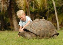 Jongetje met schildpad - Silhouette - Seychellen - foto: Seychelles Tourist Office