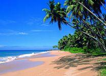 strand met palmbomen - Unawatuna - Sri Lanka