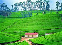 theeplantage - Nuwara Eliya - Sri Lanka