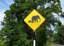 Verkeersbord olifanten Udawalawe National Park - Udawalawe National Park - Sri Lanka - foto: Karin Nuijt