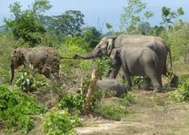 Olifanten Udawalawe National Park - Udawalawe National Park - Sri Lanka