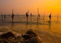 Vissermannen op palen in de ochtend, Sri Lanka - Sri Lanka - foto: Archief