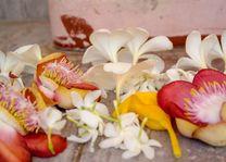 bloemen offers - Sri Lanka - foto: Mieke Arendsen