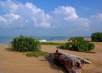 strand in Kalpitiya - Kalpitiya - Sri Lanka - foto: Mieke Arendsen
