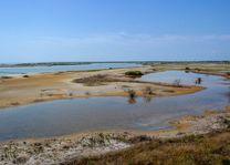 landschap noord sri lanka - Sri Lanka - foto: Mieke Arendsen