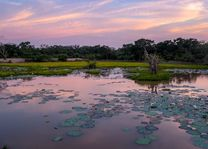 meer Mahoora tented camp in Wilpattu - Mahoora tented camp - Sri Lanka - foto: Mieke Arendsen