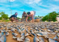 vis drogen - Sri Lanka - foto: lokaal agent