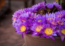 paarse bloemen - Sri Lanka - foto: lokaal agent